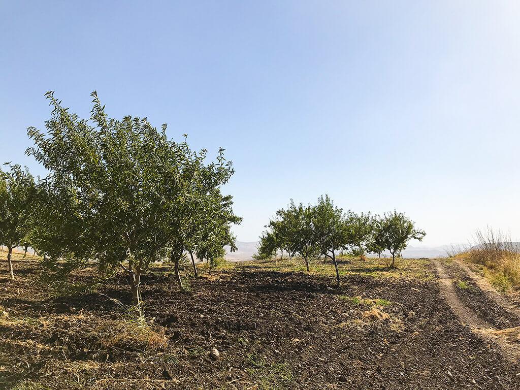 Verival Mandel Plantage